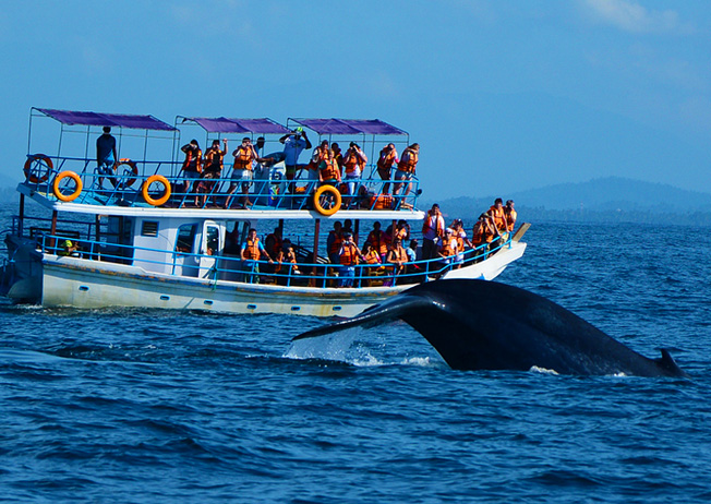 Watch the Spectacular Blue Whale