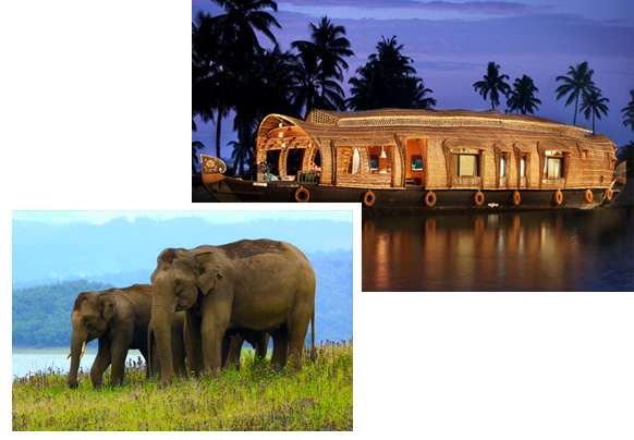Alluring Vibe of South India