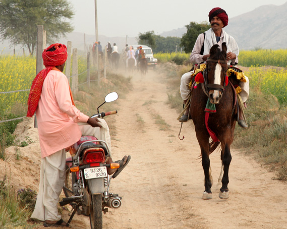 Images for india horse safari slider img4
